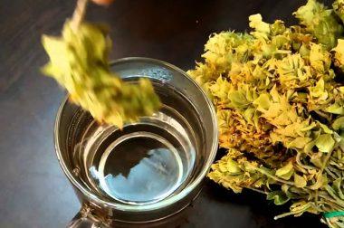 Adolea Aromatik Bitkiler